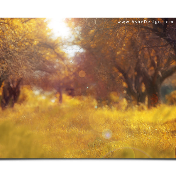 Ashe Design 16x20 Digital Backdrop Set - Autumn Meadow Before