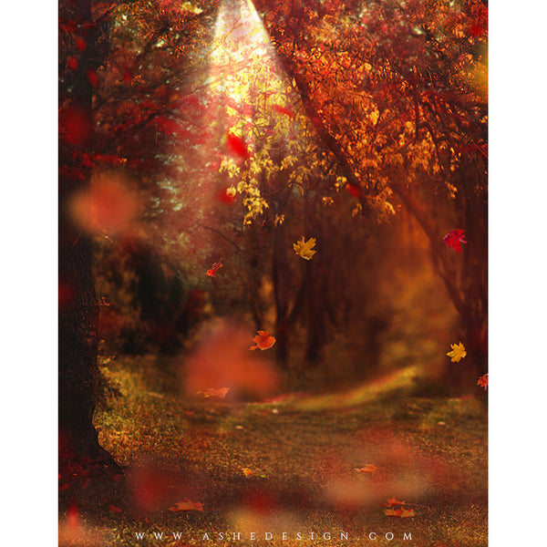 Digital Props 11x14 Backdrop Set - Autumn Woods