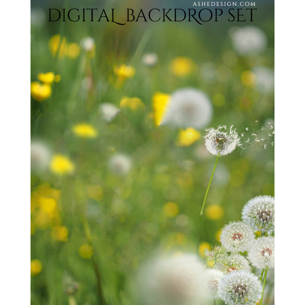 Ashe Design Digital Backdrop - Dandelions