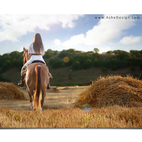 Ashe Design 16x20 Digital Backdrop Set - Hay Field After
