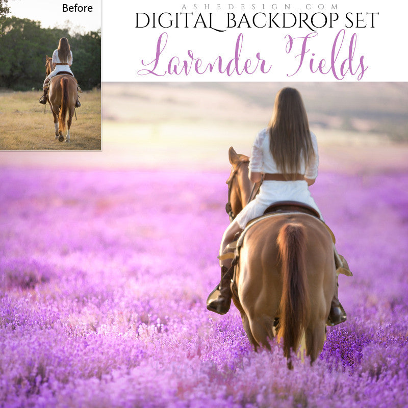 Digital Props 16x20 Backdrop Set - Lavender Fields