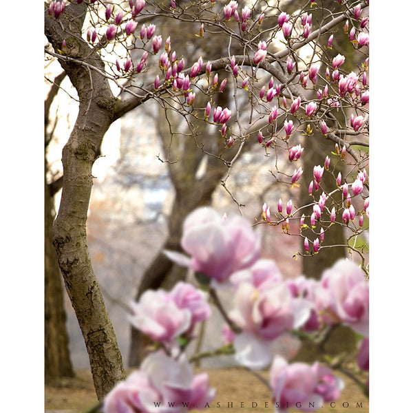 Digital Props 11x14 Backdrop Set - Magnolia