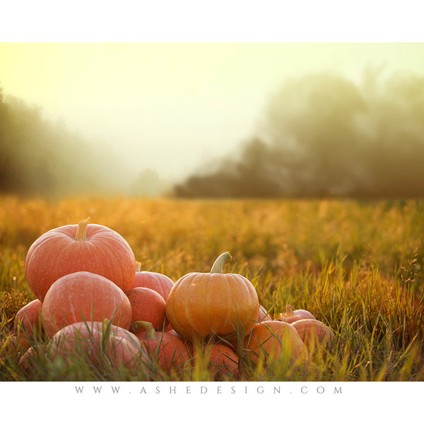 Digital Props 16x20 Backdrop Set - Pumpkin Haze