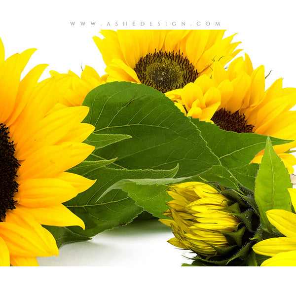 Digital Props 8x10 Backdrop Set - Sunflowers