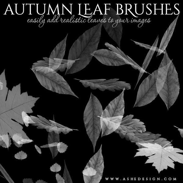 Ashe Design | Photoshop Brush Set | Autumn Leaves