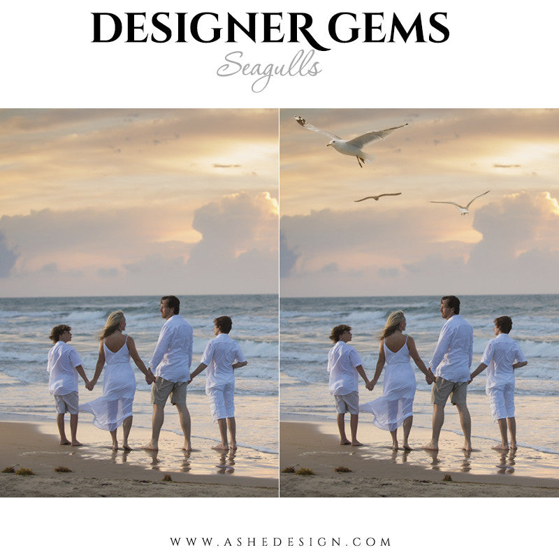 Designer Gems Photo Overlays | Seagulls