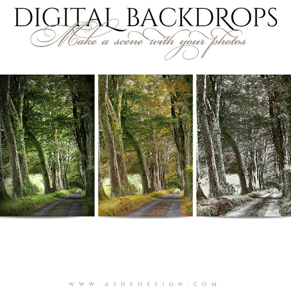 Ashe Design | Digital Backdrops | Wooded Lane full set