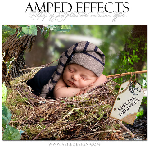 Ashe Design | Amped Effects Photography Templates | Special Delivery
