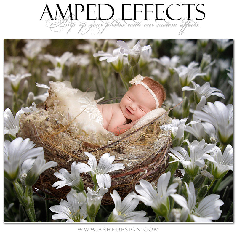 Ashe Design | Amped Effects Photography Templates - Field Of Dreams1