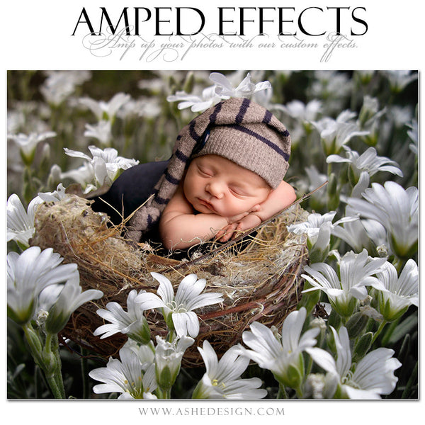 Ashe Design | Amped Effects Photography Templates - Field Of Dreams2