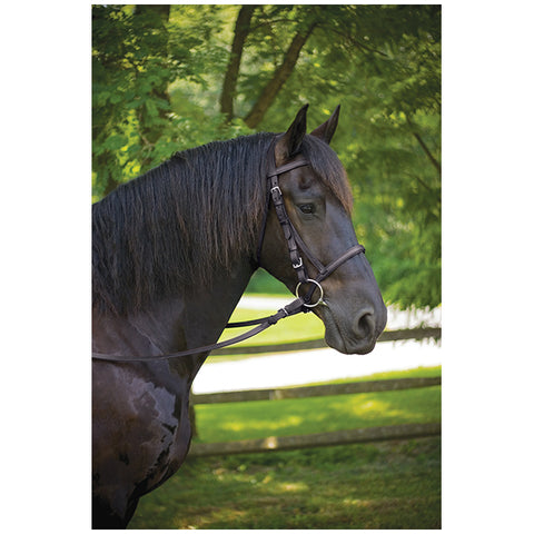 Draft Bridle Havanna