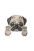PATCHES Pug - Chloe Dao
