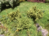 Selection of Shrubs, Spring - 5cm