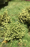 Selection of Shrubs, Spring - 3cm