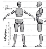 Anatomy Female 75mm