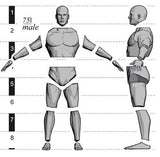 Anatomy Male 54mm