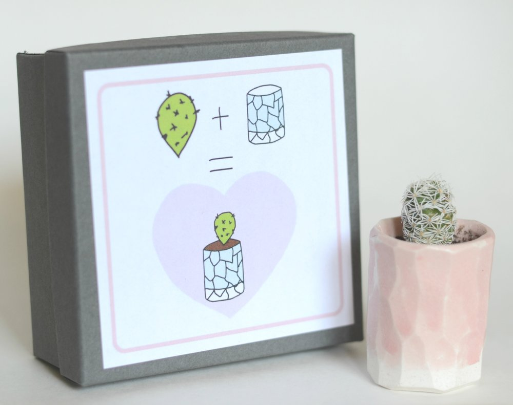 Mini Cactus Kit