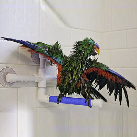 Parrot Shower Perch
