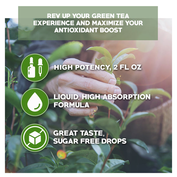 Liquid Green Tea Extract (2 oz)