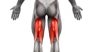 Optimal Growth Strategy: Hamstrings
