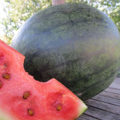 Blacktail Watermelon Seeds