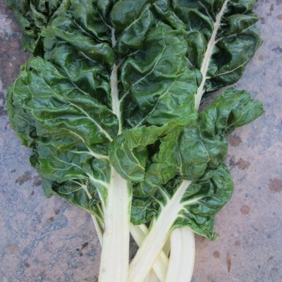 Fordhook Giant Swiss Chard Seeds
