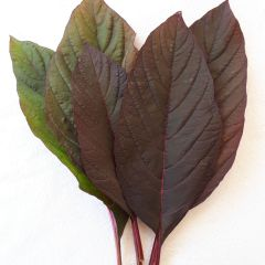 Red Callaloo Amaranthus Seeds