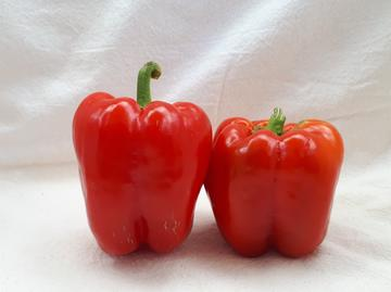 King of the North Bell Pepper Seeds