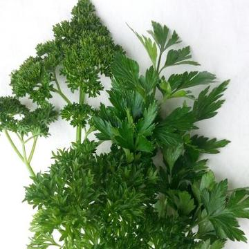 Parsley Mix Seeds