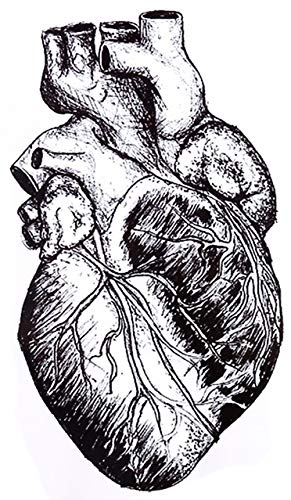"Large 7"" Heart Anatomy Black Waterproof Temporary Tattoos 2 Sheets"