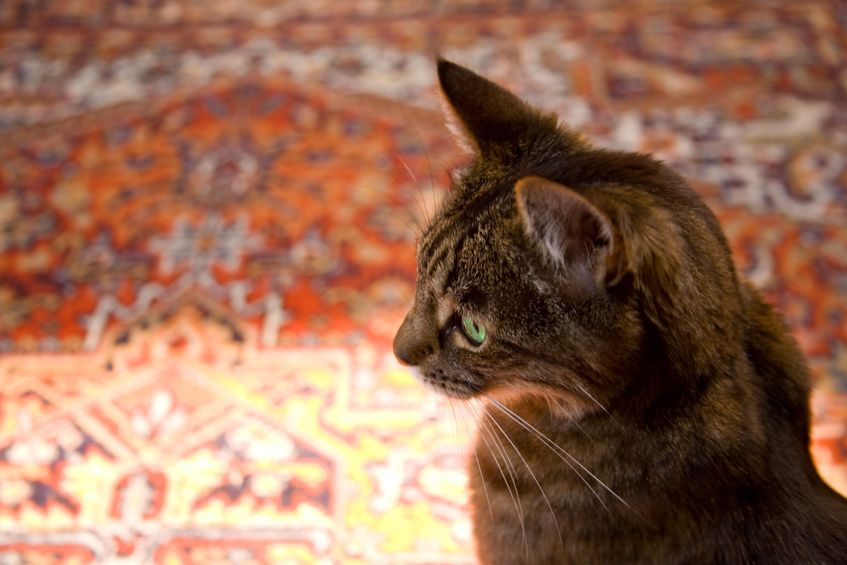 How to Protect Your Oriental Rug from Pets