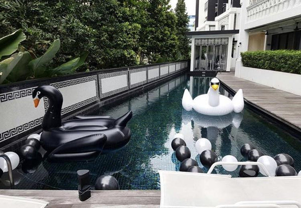 White and Black Swan Floats Bundle - letsfloatsg