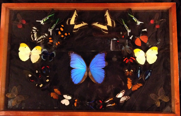 butterfly framed - Shaman's Dream Gifts