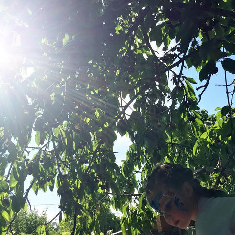 Cherry Picking, Fruit, Summer, Fruit Trees