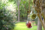 Glass Bulb Terrarium-Farmhouse Living - Farmhouse Decor
