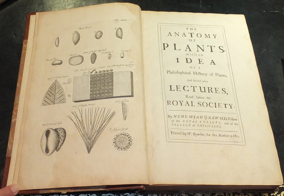 GREW, Nehemiah (1641-1712). The Anatomy of Plants. With an Idea of a Philosophical History of Plants. London: W. Rawlins for the author, 1682.