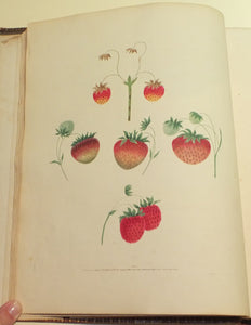 BROOKSHAW, George (1751-1823). Pomona Britannica or a Collection of the Most Esteemed Fruits at Present Cultivated in Great Britain... London: Bensley and Son, 1817.