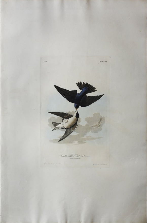 John James Audubon (1785-1851), Plate C Green Blue, White-bellied Swallow