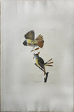 John James Audubon (1785-1851), Plate CXXIX Great Crested Flycatcher
