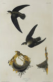 John James Audubon (1785-1851), Plate CLVIII American Swift
