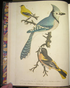 American Ornithology; or, The Natural History of the Birds of the United States. WILSON, Alexander (1766-1813)
