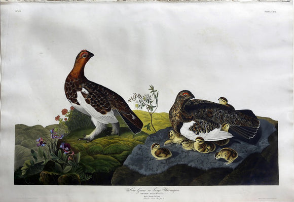 John James Audubon (1785-1851), Plate CXCI Willow Grouse or Large Ptarmigan