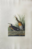 John James Audubon (1785-1851), Plate CCIV Salt Water Marsh Hen