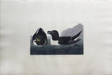 John James Audubon (1785-1851), Plate CCXIV Razor Bill