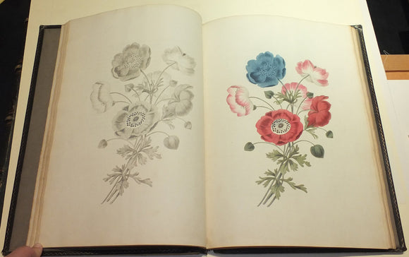 BROOKSHAW, George (1751-1823). Groups of Flowers... WITH Six Birds… WITH Groups of Fruit, Accurately Drawn and Coloured after Nature… London: Thomas McLean, 1819.