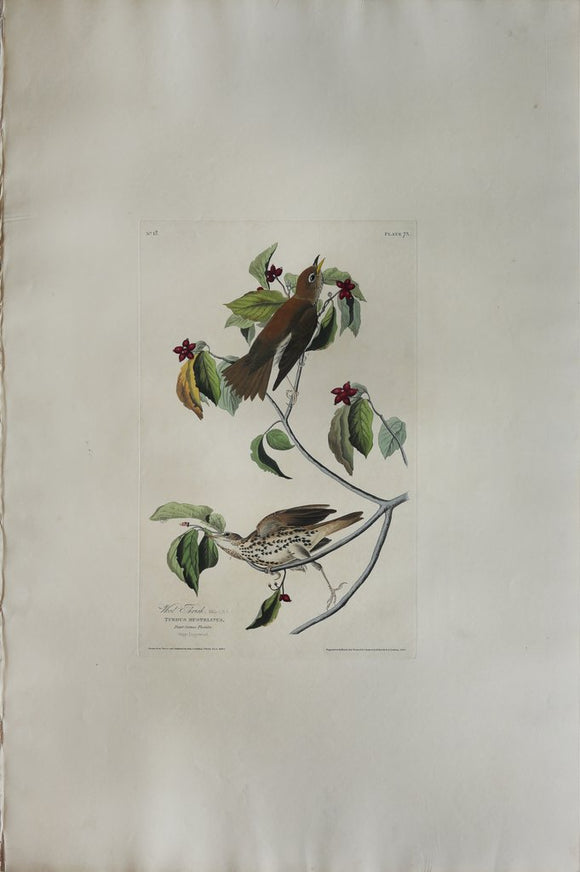 John James Audubon (1785-1851), Plate LXXIII Wood Thrush