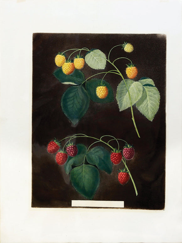 George Brookshaw (1751-1823) Raspberries, Plate IV (4)