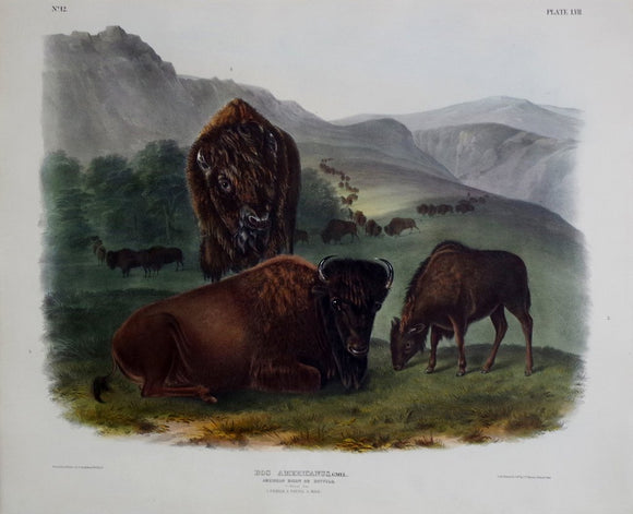 John James Audubon (1785-1851) & John Woodhouse Audubon (1812-1862), American Bison or Buffalo Pl. LVII