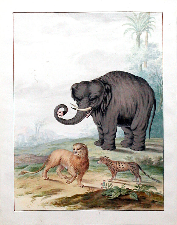 Johannes Bronckhorst (Dutch, 1648-1727)  An Asian Elephant, a Lion and a Civet Cat in a Landscape  Pen and black ink and watercolor and gum arabic within brown ink framing lines
