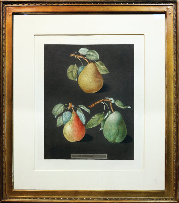 George Brookshaw(1751-1823)  Pears  From: Pomona Britannica